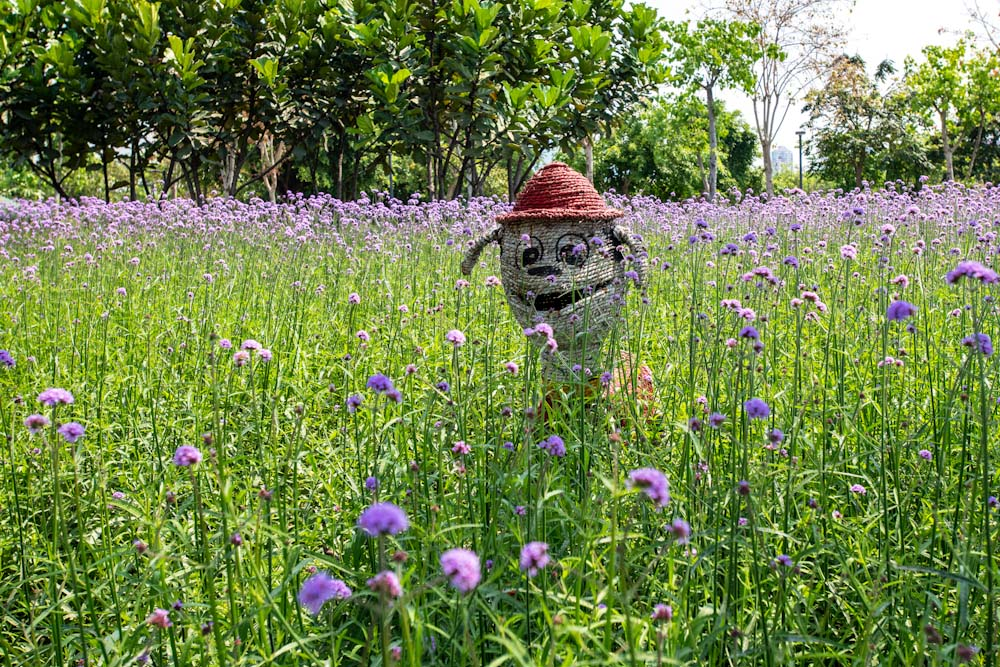 厦门园林博览苑五月的颜色-7.jpg