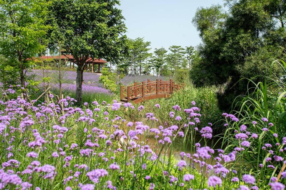 厦门园林博览苑五月的颜色-6.jpg