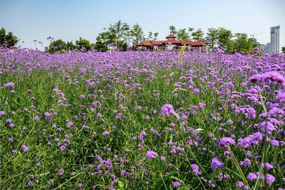 厦门园林博览苑五月的颜色-5.jpg