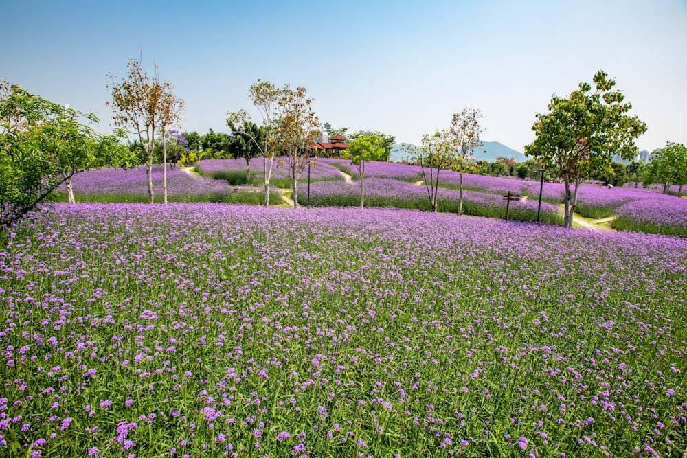厦门园林博览苑五月的颜色-24.jpg