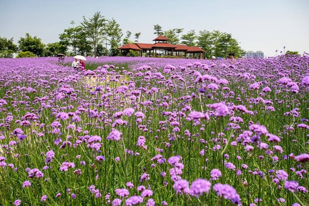 厦门园林博览苑五月的颜色-29.jpg
