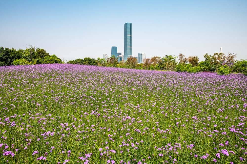 厦门园林博览苑五月的颜色-26.jpg