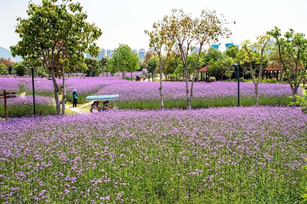 厦门园林博览苑五月的颜色-28.jpg