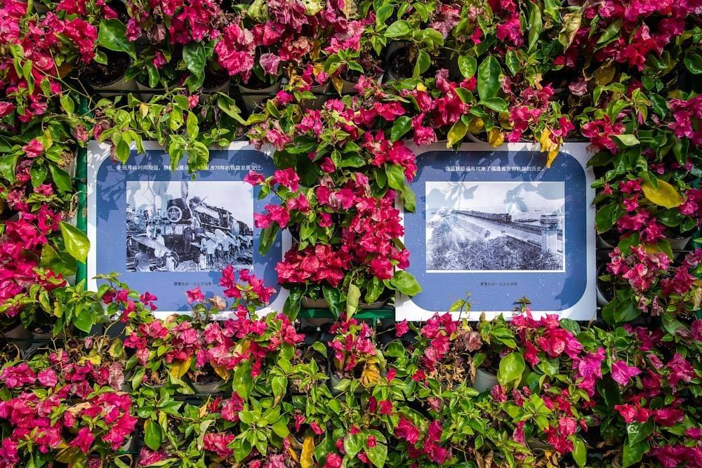 """厦门园林博览苑""""艺景杯""""市花展-35.jpg"""